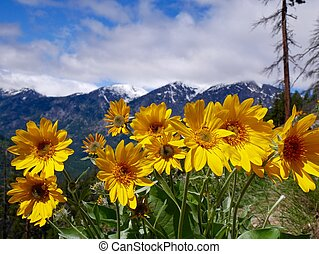 Flowers, Mountains, Snow, Clouds.