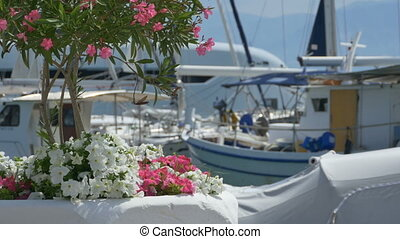 Flowers Near Yachts - Port view with boats and flowers on...
