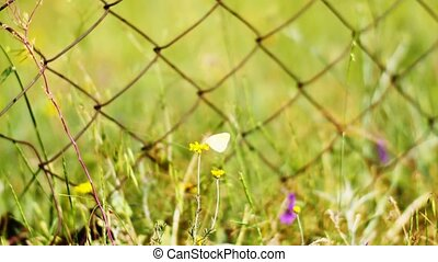 Flowers Next to a Metal Gate