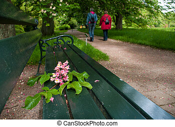 bench in a park - flowers of a red horse chestnut on a bench...