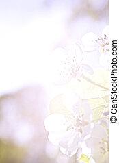 Flowers of apple in pastel colors - Flowers of apple...