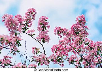 Flowers of apple tree on blue sky background