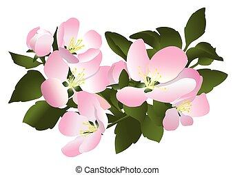flowers of apple tree - vector