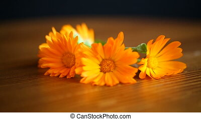 flowers of calendula orange color