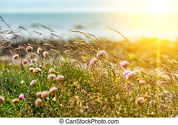 clover - flowers of clover and grass in the sun against the ...