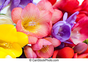 Flowers of freesia
