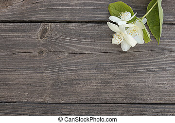 Flowers of jasmine on wooden background