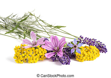 Flowers of medicinal plants isolated on white