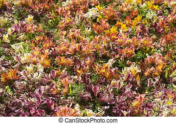 Flowers of Multiple Hues