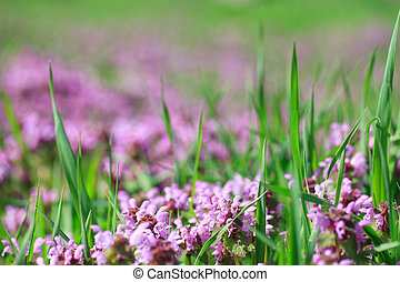 Flowers of the field in green grass