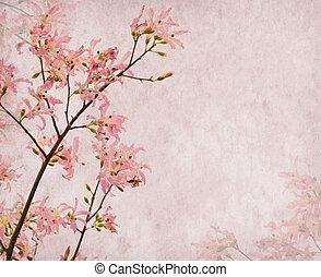 Flowers of the Silk Floss Tree, Chorisia Speciosa, blossom ...