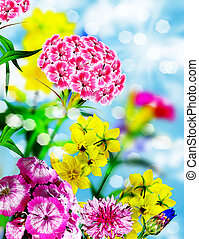 Flowers on a background of blue sky