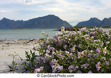flowers on a beach