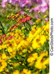 Flowers on a colorful meadow in summer