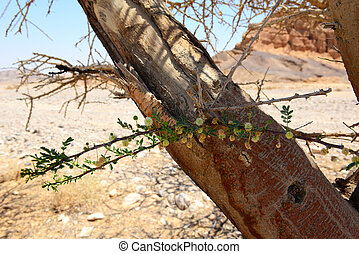 Flowers on a dry tree