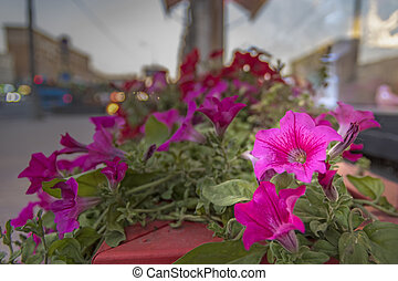 Flowers on a flower bed in the evening city.