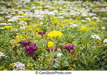 Flowers on a meadow in the summer