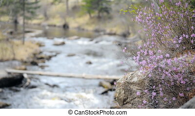 Flowers on a mountain river and rolling over the bridge person.