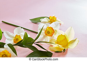 Flowers on a pink background
