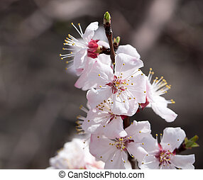 flowers on a tree in spring
