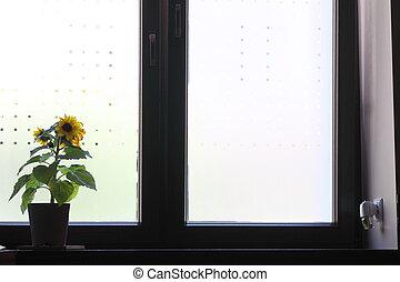 Flowers on a window sill.