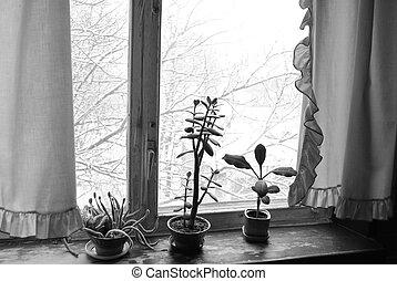 flowers on a window-sill