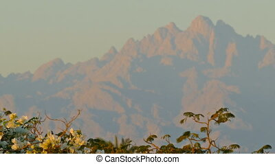 flowers on background of distant mountains - Branch with...