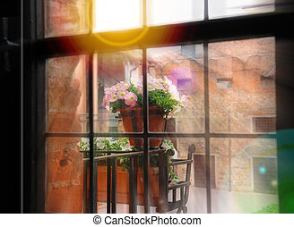 Flowers on balcony in rays of the sun