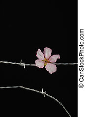 Flowers on barbed wire