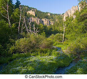 Flowers on Canyon Floor