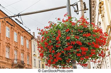 Flowers on city street in Bratislava, Slovakia.