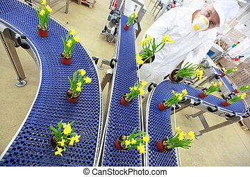 flowers on conveyor belt, production line, contemporary ...