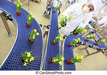 flowers on conveyor belt,production line,contemporary...