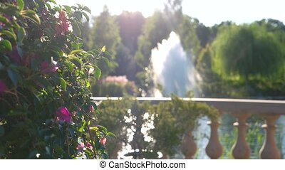 Flowers on fountain background. Plant on the balcony. Basics...
