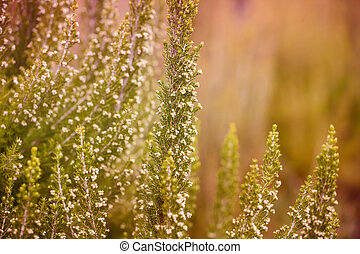 Flowers on Meadow Background