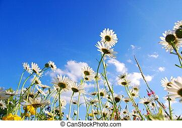 flowers on meadow in summer