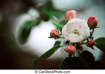 flowers on peach tree in the background of  nature