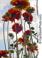 Flowers on sky