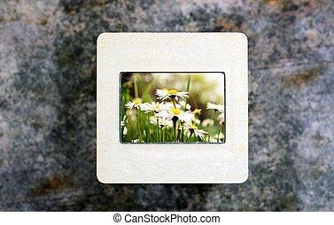 Flowers on slide film