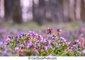 flowers on spring field closeup