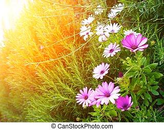 Flowers on sunny field.