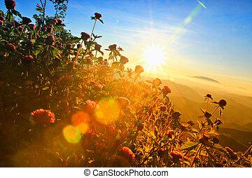 flowers on sunrise background.