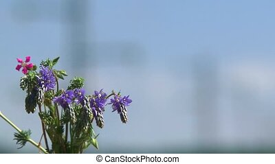 Flowers On The Background Of Power Lines
