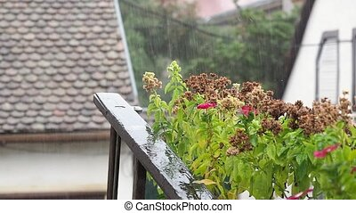 Flowers on the balcony in the rain. The old wooden ladder and flowers on a background of blurred houses