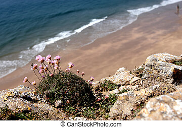 Flowers on the cliffs, sea in the background