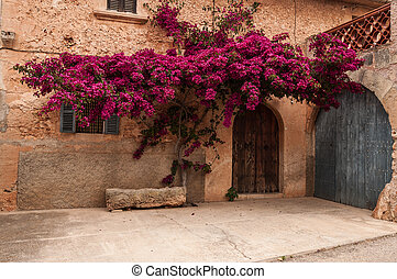Flowers on the facade of a house