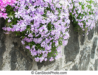 flowers on the garden wall