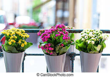 Flowers on the terrace