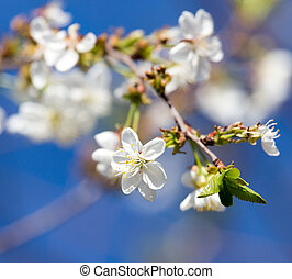 flowers on the tree against the blue sky