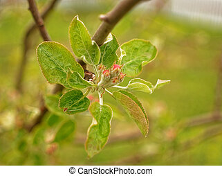 Flowers on young tree in the spring